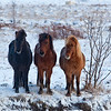 Three Horses of Iceland