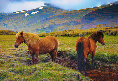 Two Lone Horses