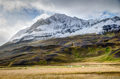 Autumn Harvest in North Iceland