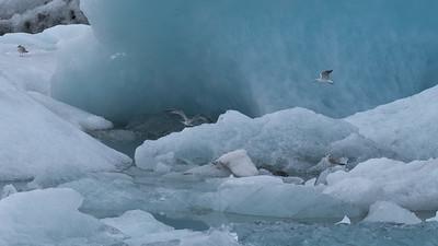 Icy Aviary - P5