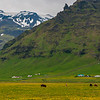 View of Icelandic Horses and Icelandic Farm.