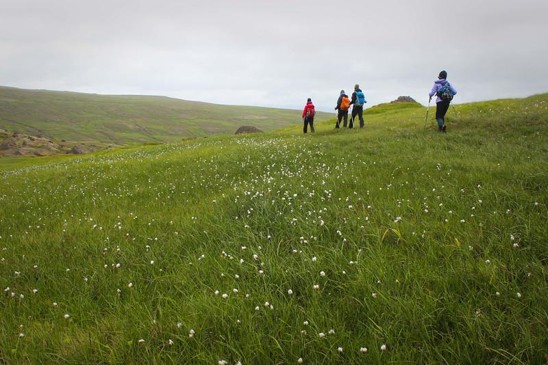Green lands of East Iceland