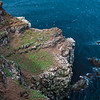 Colonies of Kittiwakes, Northern Gannets and Common Murres populate a cliff in northeastern Iceland.