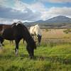 More pretty horses