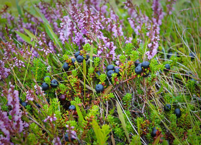 Blueberry feast