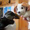 Beanie meets his first puffin
