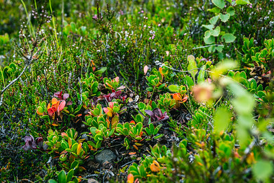 Colorful Small Plants Growing in Rocky Soil