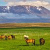 Icelandic Horses Landscape