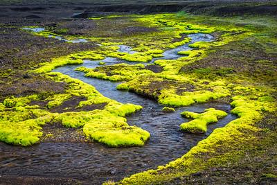 Braided Stream/Green Fountain Moss