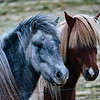 Horses with Attitudes