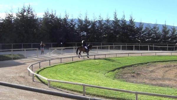 Random Horse Videos
