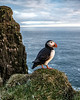Lantjabargan is one of the places where it is easy to photograph puffins in iceland.