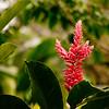 Nature in Chiapas 10:Journey into Chiapas Mexico