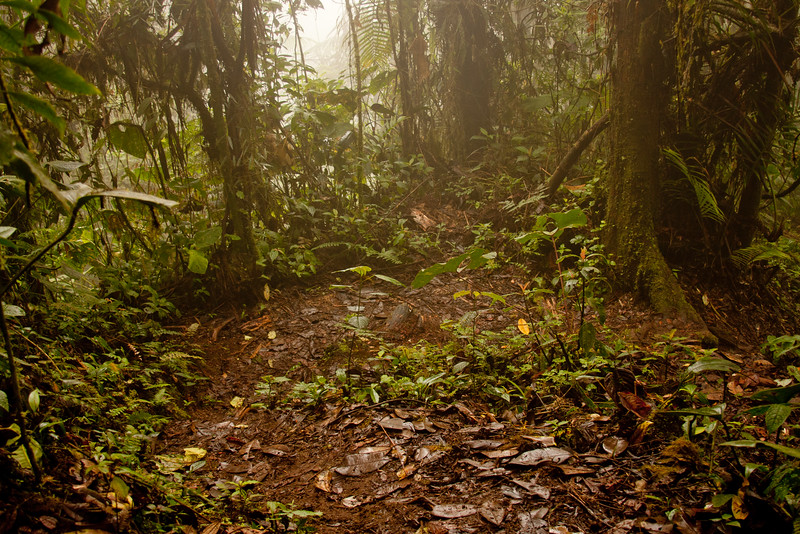 Journey into the Mountains 2: Bellavista Cloud Forest Reserve Journey into Ecuador