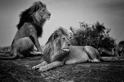 Iconic Africa