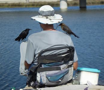 Great-tailed Grackle San Luis Rey Oceanside 2012 11 07 (1 of 1).CR2