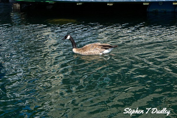 A Day on Pend Oreille