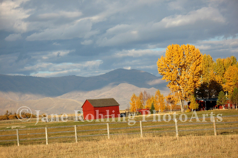 Bright yellow leaves and a red barn adorn the pastoral autumn landscape along Highway 20 in Blaine County, Idaho.
