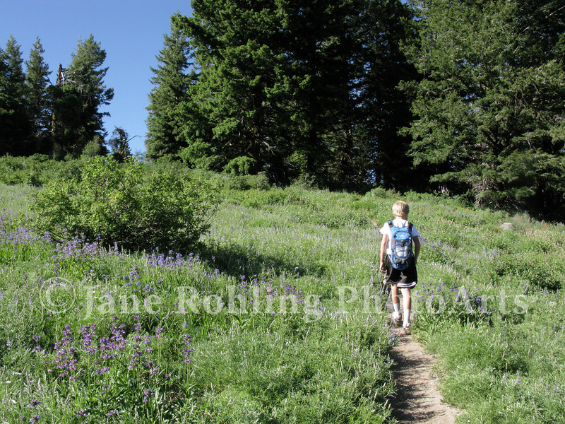 A boy enjoys a day hike through a meadow filled with summer wildflowers on Mores Mountain on the Boise National Forest near Boise, Idaho