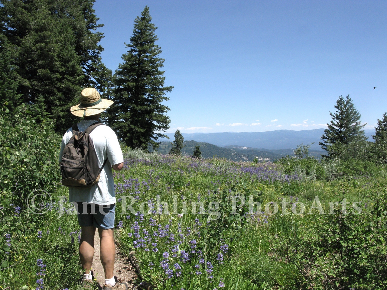 A man enjoys a day hike through a meadow filled with summer wildflowers on Mores Mountain on the Boise National Forest near Boise, Idaho