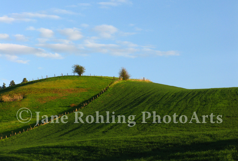 Lush green fields of early summer near Cul de Sac, Idaho
