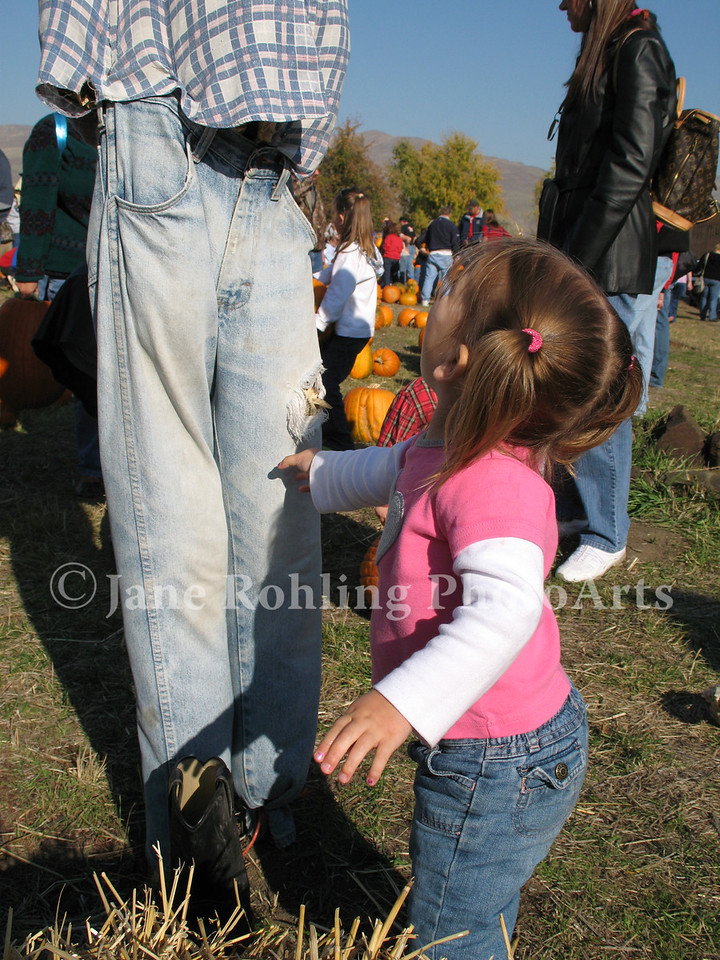 A little girl tugs the pantleg of a scarecrow in the pumpkin patch, Thunder Mountain Railroad, Horseshoe Bend, Idaho.
