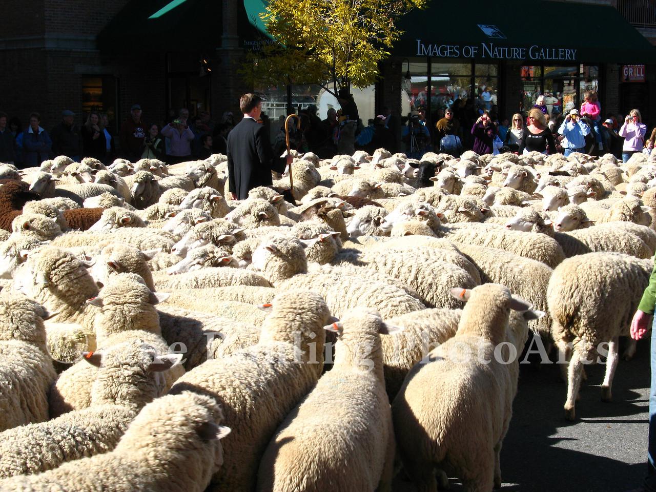 A Catholic priest gives the traditional blessing of the sheep during the Trailing of the Sheep Festival parade, Ketchum, Idaho.