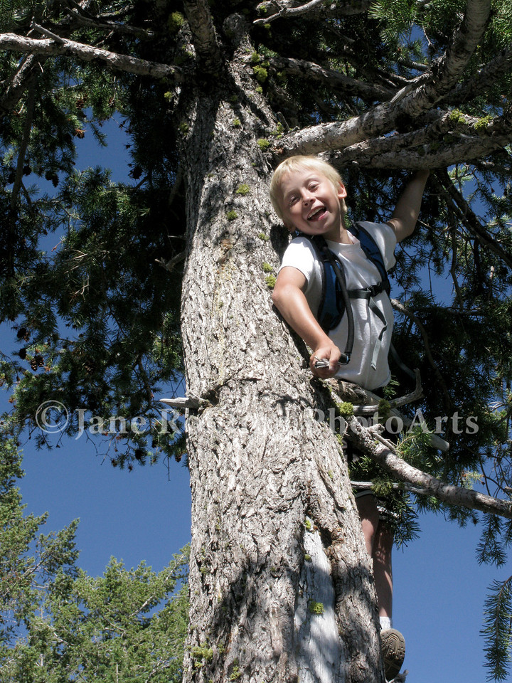 A boy enjoys climbing a pine tree on Mores Mountain on the Boise National Forest near Boise, Idaho