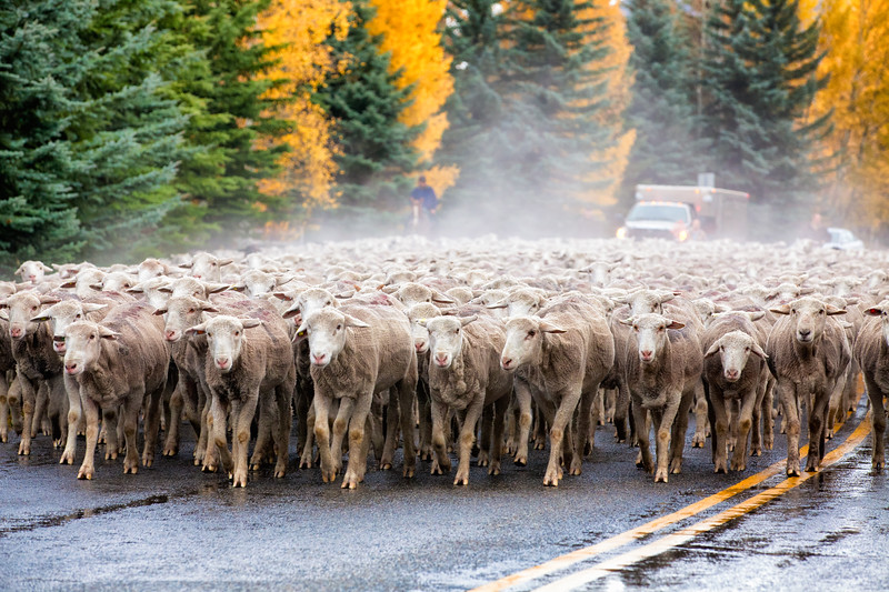 Idaho Traffic Jam