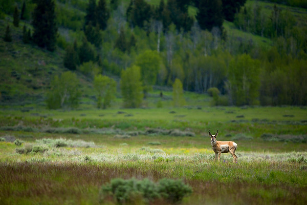 Idaho Wildlife