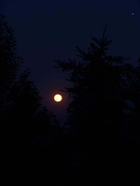 Full moon on 7.17.08 with pine tree silhouettes.