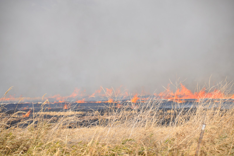 Idaho farmer burning field stubble. 11.09