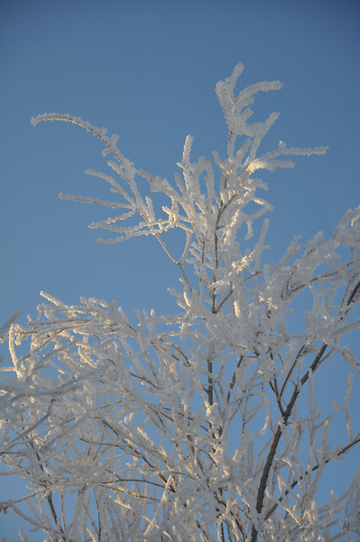 Frost on the bare tree branches. Idaho. 1.09