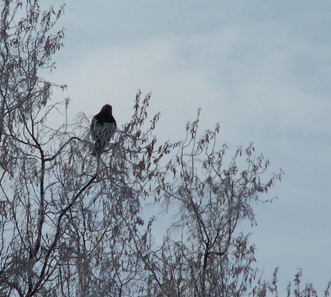 Bird's Eye View 3.10.08