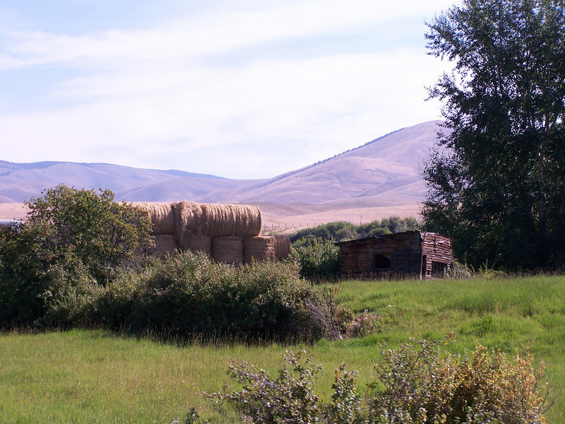 Old farm building and hay bales near Salmon, Idaho. 8.08