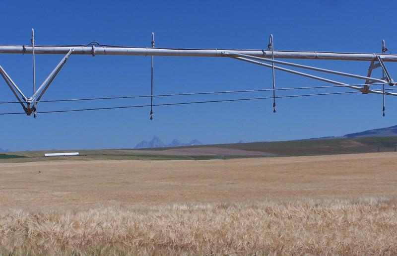 Idaho barley field with sprinkler irrigation overhead and Teton Mountain Range in the distance. 8.08