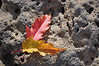 Autumn leaves on lava rock.  Idaho.11.09