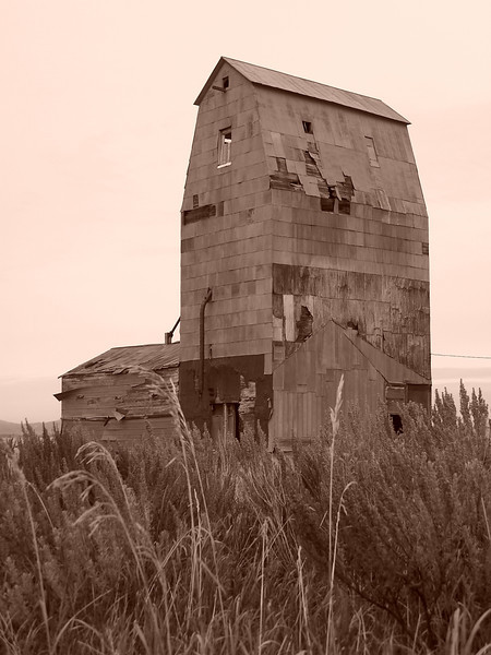 Grain elevator with sagebrush in the foreground, Grainville, ID. 11.08. Sepia