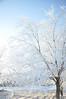 Frost on the bare trees. Idaho. 1.09