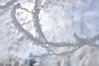 Hoarfrost on the Elm Tree. Idaho. 1.24.11