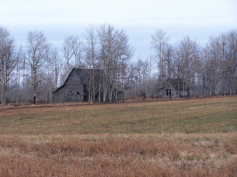 Old homestead in the Aspens, near Ashton, Id. 11.08