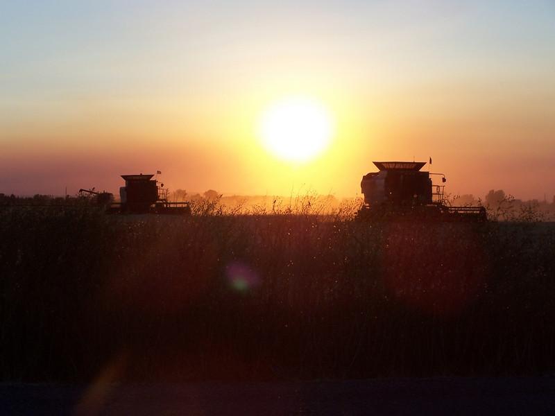 Combines harvesting at sunset. Idaho. 8.08