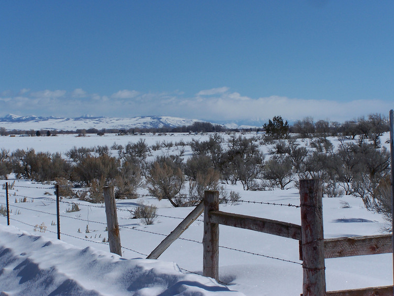 Sagebrush pasture with distant mountains