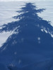 Blue Spruce shadow in the snow