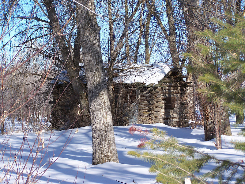 Log cabin through the trees, color