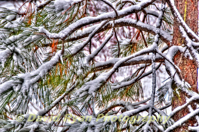 Tamarack Resort, Snow on Pine Tree