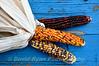Indian Corn, McCall