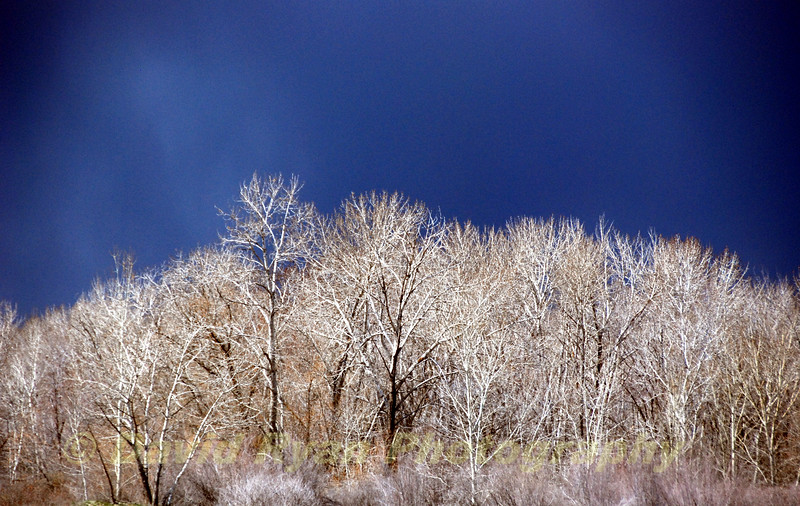 Storm Clouds and Cottonwood Trees in Boise, Idaho