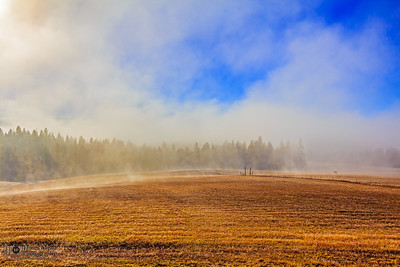 """Morning Mist,"" Mist over the pasture in late autumn, Harrison, Idaho"