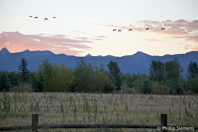 From the Driggs house deck, Sandhill cranes and the Teton range